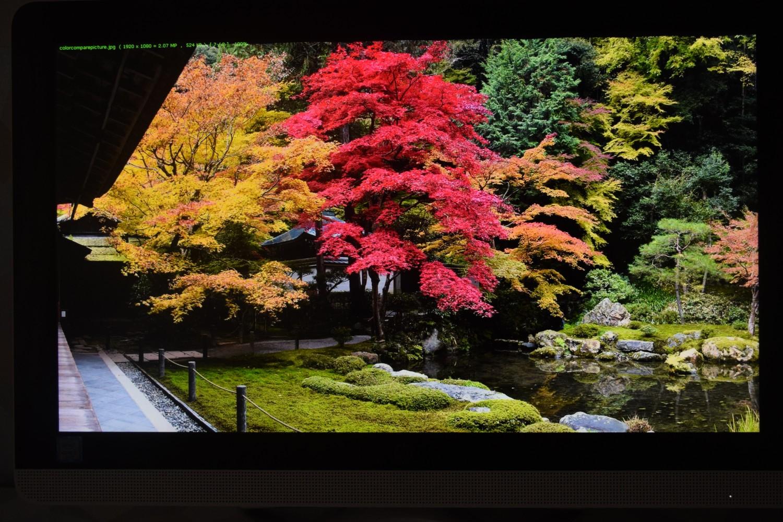 HP All-in-One 22-b043ne - pohľad na displej (stromy)